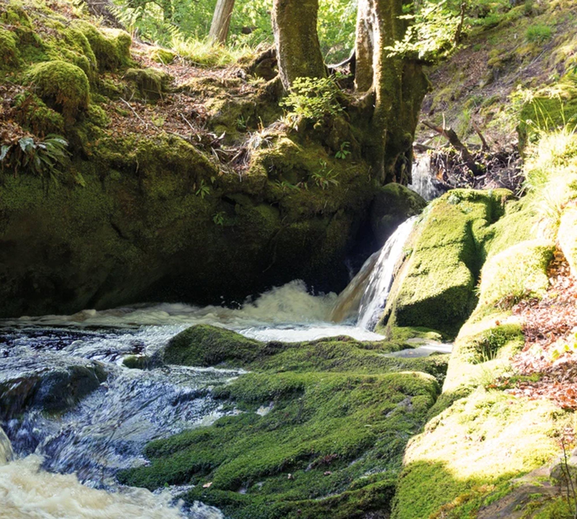 Arran – Sense of Scotland